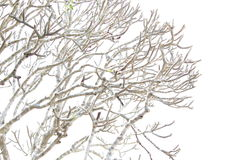 Δέντρο χωρίς ήλιο φύλλων vinter Στοκ Φωτογραφίες