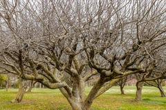 Δέντρο χωρίς φύλλα Πρόωρη έννοια άνοιξη ψηφιακή έξοχη φύση γραμμών τέχνης που ξυπνά στοκ εικόνες με δικαίωμα ελεύθερης χρήσης
