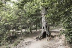 δέντρο όπως ένα gost1 στοκ εικόνα με δικαίωμα ελεύθερης χρήσης