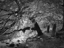 Δέντρο όχθεων ποταμού με τις μόνιμες πέτρες Στοκ Φωτογραφίες