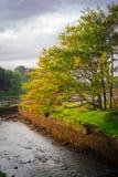 Δέντρο όχθεων ποταμού Στοκ εικόνα με δικαίωμα ελεύθερης χρήσης
