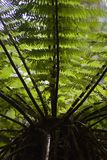 δέντρο 02 φτερών Στοκ Φωτογραφία