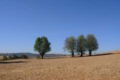 δέντρο 04 Στοκ Εικόνα