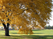 δέντρο 2 φθινοπώρου στοκ εικόνες με δικαίωμα ελεύθερης χρήσης