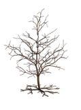 δέντρο Στοκ εικόνα με δικαίωμα ελεύθερης χρήσης