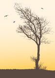 δέντρο απεικόνιση αποθεμάτων