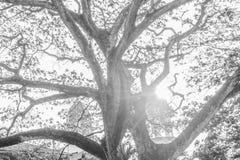 Δέντρο στοκ φωτογραφίες