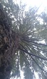 Δέντρο Στοκ εικόνες με δικαίωμα ελεύθερης χρήσης
