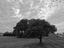 Δέντρο Στοκ Φωτογραφία