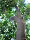 Δέντρο Στοκ Εικόνες