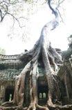 δέντρο angkor Στοκ εικόνα με δικαίωμα ελεύθερης χρήσης