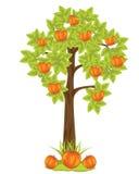 Δέντρο Aple Στοκ Εικόνα