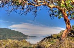 δέντρο arbutus Στοκ φωτογραφίες με δικαίωμα ελεύθερης χρήσης