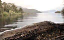 Δέντρο Arrayan στην Παταγωνία, Αργεντινή Στοκ φωτογραφία με δικαίωμα ελεύθερης χρήσης
