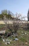 Δέντρο Bloomong στην απόρριψη Στοκ εικόνα με δικαίωμα ελεύθερης χρήσης