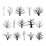 Δέντρο branch4 στοκ εικόνες