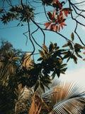 Δέντρο Branchs Στοκ φωτογραφίες με δικαίωμα ελεύθερης χρήσης
