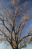 Δέντρο Brannches Στοκ εικόνες με δικαίωμα ελεύθερης χρήσης