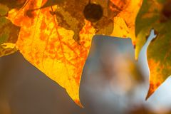 Δέντρο brunch στο υπόβαθρο ήλιων Στοκ Φωτογραφία