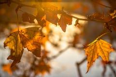 Δέντρο brunch στο υπόβαθρο ήλιων Στοκ φωτογραφίες με δικαίωμα ελεύθερης χρήσης