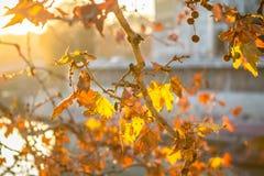 Δέντρο brunch στο υπόβαθρο ήλιων Στοκ φωτογραφία με δικαίωμα ελεύθερης χρήσης