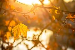 Δέντρο brunch στο υπόβαθρο ήλιων Στοκ εικόνες με δικαίωμα ελεύθερης χρήσης