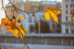 Δέντρο brunch στο υπόβαθρο ήλιων Στοκ Φωτογραφίες