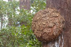 Δέντρο burl στοκ εικόνες