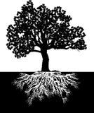 δέντρο bw Στοκ Εικόνες