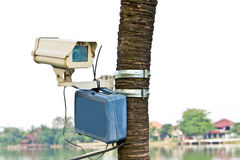 δέντρο CCTV φωτογραφικών μηχα&nu Στοκ εικόνες με δικαίωμα ελεύθερης χρήσης