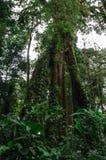 Δέντρο Ceibo Στοκ Φωτογραφία