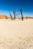 Δέντρο Deadvlei στοκ φωτογραφία με δικαίωμα ελεύθερης χρήσης