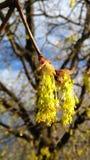 Δέντρο Fairys Στοκ φωτογραφίες με δικαίωμα ελεύθερης χρήσης