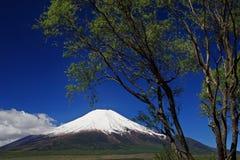 δέντρο fuji στοκ εικόνες με δικαίωμα ελεύθερης χρήσης