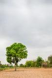 Δέντρο Gant στη θύελλα Στοκ Φωτογραφίες