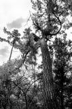 Δέντρο Hornic στοκ φωτογραφία με δικαίωμα ελεύθερης χρήσης
