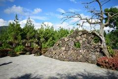 Δέντρο Lanscape και ομορφιάς στο πάρκο Στοκ Εικόνες