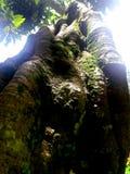 Δέντρο log2 στοκ εικόνες
