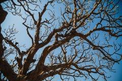 Δέντρο Magnolia Στοκ εικόνα με δικαίωμα ελεύθερης χρήσης