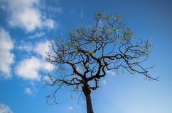 Δέντρο, Mamallapuram στοκ φωτογραφία