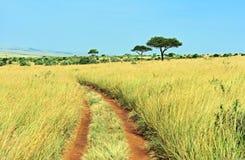Δέντρο Masai Mara Στοκ φωτογραφία με δικαίωμα ελεύθερης χρήσης