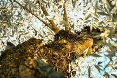 Δέντρο Mediteraneean Στοκ φωτογραφία με δικαίωμα ελεύθερης χρήσης