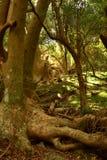 Δέντρο Ombu Στοκ φωτογραφίες με δικαίωμα ελεύθερης χρήσης