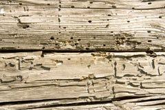 δέντρο wormholes Στοκ εικόνες με δικαίωμα ελεύθερης χρήσης