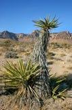 Δέντρο Yucca στα βουνά Στοκ εικόνες με δικαίωμα ελεύθερης χρήσης