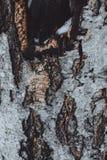 Δέντρων χειμερινού χιονιού σύστασης καφετιά μαύρη φλοιών λεπτομέρεια πάρκων χρώματος κρύα κοίλη Στοκ Φωτογραφίες