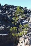 Δέντρων & Obsidian πεύκων ροή Στοκ φωτογραφία με δικαίωμα ελεύθερης χρήσης