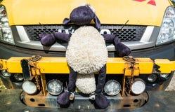 Δέος λιμνών, Argyll, Σκωτία - 15 Μαΐου 2017: Όχημα ραγών δικτύων που περιμένει με τα μαλακά πρόβατα παιχνιδιών στο δοχείο ψύξης Στοκ εικόνες με δικαίωμα ελεύθερης χρήσης