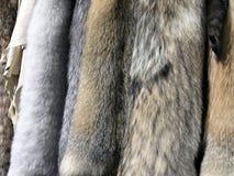 δέρματα γουνών Στοκ φωτογραφία με δικαίωμα ελεύθερης χρήσης