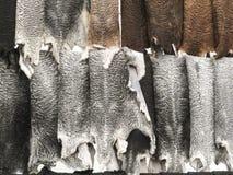Δέρματα προβάτων Στοκ φωτογραφίες με δικαίωμα ελεύθερης χρήσης